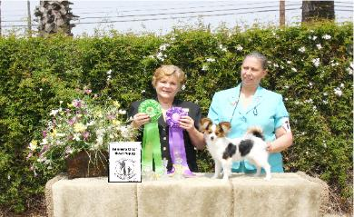 winners_bitch_best_puppy_1_show-390x239